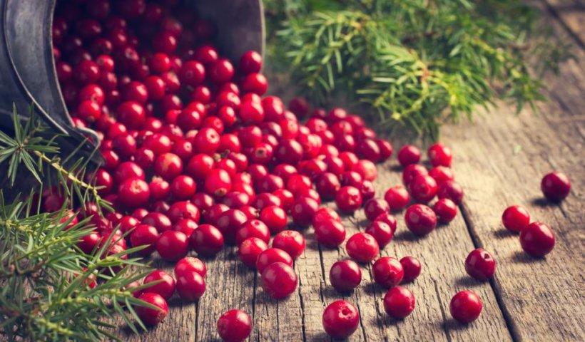 蔓越莓含有多酚