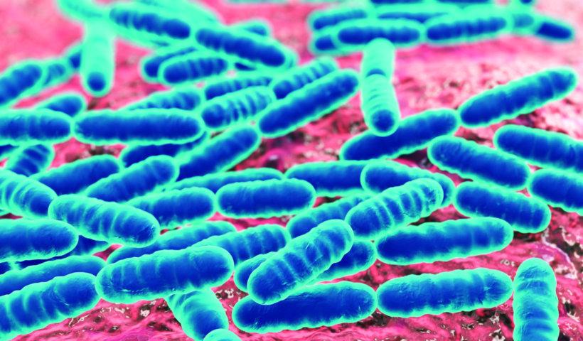 腸道益生菌